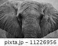 動物園 屋外 野外 11226956