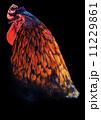 鶏 11229861