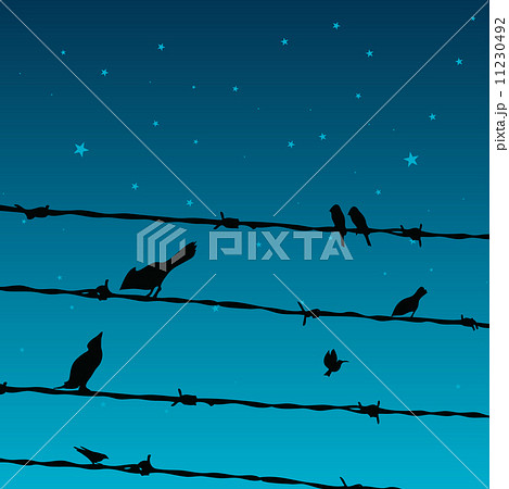 Birds on Wires 11230492