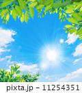 青空と太陽と新緑 11254351