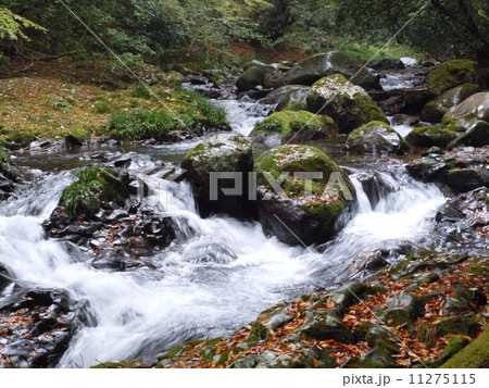 秋の渓流(静岡県河津町) 11275115
