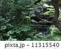 初夏の山吹水源 11315540
