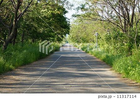 自然の中の道 11317114