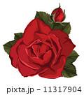 花 ベクター バラのイラスト 11317904