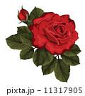 花 ベクター 白背景のイラスト 11317905
