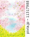 桜と菜の花畑 11317988