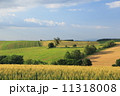 美瑛町 農地 畑の写真 11318008