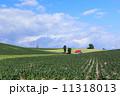 美瑛町 農地 畑の写真 11318013
