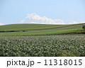 美瑛町 農地 畑の写真 11318015