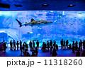 美ら海水族館 11318260