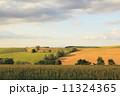 美瑛町 農地 畑の写真 11324365