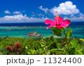 沖縄県 ハイビスカスと青い海 11324400