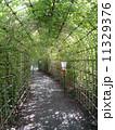向島百花園 トンネル 萩の写真 11329376