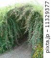 向島百花園 トンネル 萩の写真 11329377