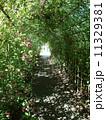 向島百花園 トンネル 萩の写真 11329381