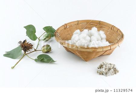 Cotton plant and seedの写真素材 [11329574] - PIXTA