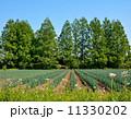 ねぎ畑 田畑 畑の写真 11330202