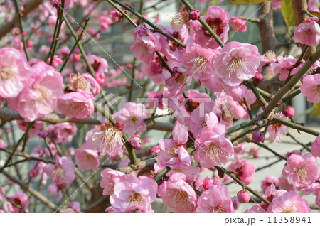 花 フラワー お花 11358941