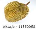 熱帯性 熱帯産 熱帯 11360068