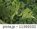 植物 工場 プランツ 11360202