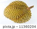 熱帯性 熱帯産 熱帯 11360204