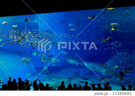 美ら海水族館の巨大水槽 11369885