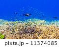 小魚 熱帯魚 海中の写真 11374085