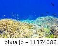 小魚 熱帯魚 海中の写真 11374086