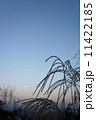 すすき 満月 月の写真 11422185