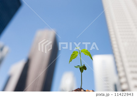 高層ビルと芽生え 11422943