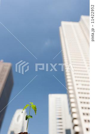 高層ビルと芽生え 11422952