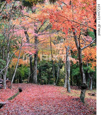 虹の滝キャンプ場、紅葉の遊歩道(香川県木田郡三木町) 11447234