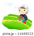 茶葉 茶畑 茶摘みのイラスト 11449213