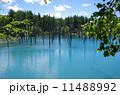 青い池 11488992