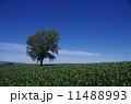 哲学の木 11488993