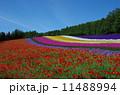 彩の畑 11488994