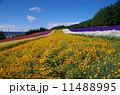 彩の畑 11488995