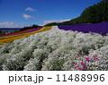 彩の畑 11488996
