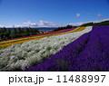 彩の畑 11488997