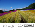 彩の畑 11488998