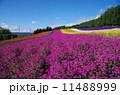 彩の畑 11488999