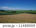丘の風景 11489009