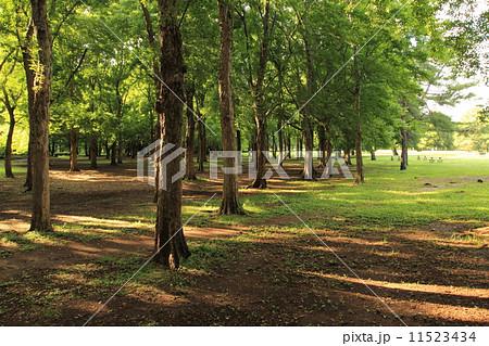 夕方の公園 11523434