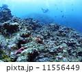 スキューバダイビング ダイビング 石垣島の写真 11556449