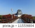 秋の墨俣城 紅葉 橋の写真 11559804