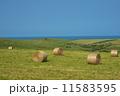 稚内丘陵の牧草地 11583595