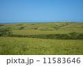 稚内丘陵の牧場 11583646