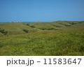 稚内丘陵の牧場 11583647