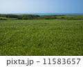 稚内丘陵の牧草地 11583657