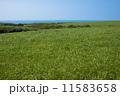 稚内丘陵の牧草地 11583658